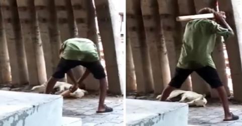 गाजियाबादः कुत्ते को पीटना शख्स को पड़ा भारी, पुलिस ने मामला दर्ज किया, सीसीटीवी में रिकॉर्ड हुई घटना