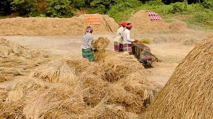 कृषि कानूनों के खिलाफ आवाज बुलंद करने वाले पंजाब में होगी धान खरीद की जांच, ये है वजह