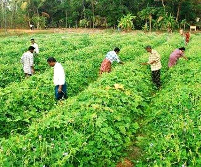 ये है बिना लागत वाली प्राकृतिक खेती, जानिए इसे करने पर कितने रुपये की मदद देती है सरकार…