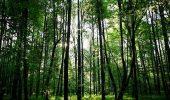ऑक्सीजन का संकट कम करने के लिए विकसित किया जाएगा वन, मियावाकी की पद्धति का होगा इस्तेमाल, जानिए अन्य खास बातें