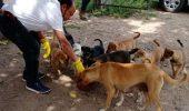 जिले में लगातार बढ़ते जा रहे आवारा कुत्ते, संख्या जानकर रह जाएंगे हैरान, रोजाना लोग हो रहे शिकार