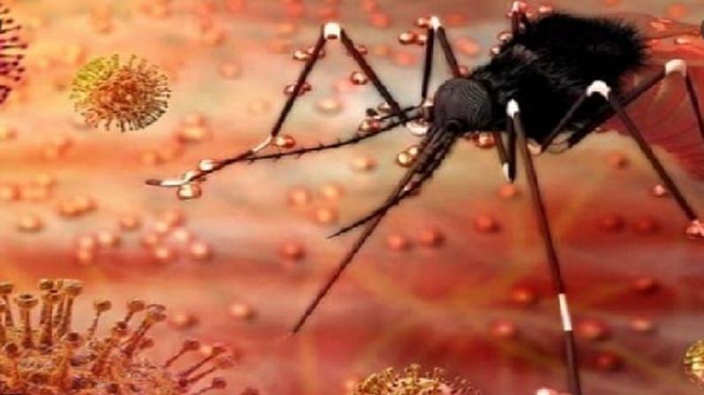 महाराष्ट्र में जीका वायरस का पहला केस:पुणे में 50 साल की महिला संक्रमित; केरल में अब तक 63 मरीज सामने आ चुके हैं